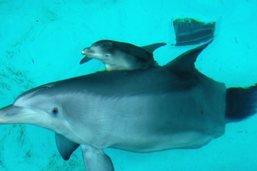 Dauphins de la Manche fortement contaminés par mercure et PCB