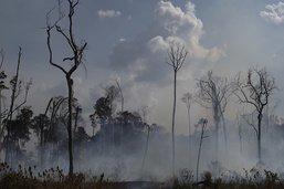 Plus de 2200 feux de forêt en 2019 en Colombie