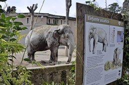 Le zoo de Rome, miroir du siècle