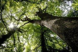 La forêt devra s'adapter au climat