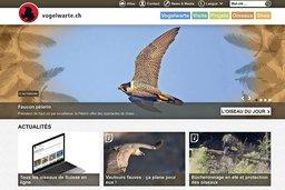 Les oiseaux de Suisse en ligne