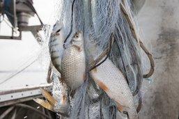 Les filets des pêcheurs restent vides