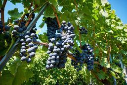 L'Etat de Fribourg dévoile ses nouveaux vins