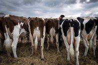 Succès pour un projet fribourgeois visant à réduire l'usage d'antibiotiques