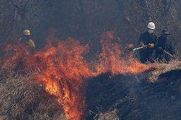 Au moins 2,3 millions d'animaux ont péri dans les feux en Bolivie