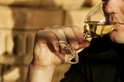 Faire du vin dans les pays nordiques, un pari d'avenir