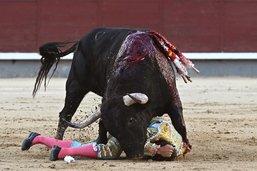 Un jeune torero gravement blessé d'un coup de corne à Madrid