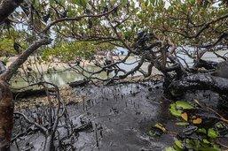 L'une des plus belles plages brésiliennes souillée par le pétrole