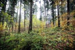 La forêt de l'avenir sera testée à Bulle