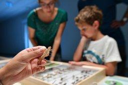 Les libellules du canton s'affichent au Musée d'histoire naturelle
