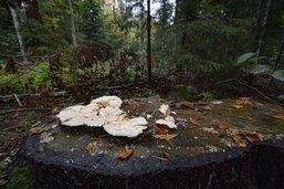 ForêtGruyère, 40 ans d'existence et de nombreux défis