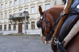 Des chevaux pour le ramassage des sapins à Fribourg