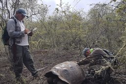 Découverte aux Galapagos d'une tortue géante
