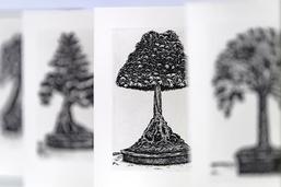 L'arbre cache la forêt