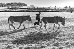 La vie de berger nomade