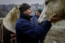 L'abbaye, éden pour les chevaux