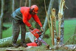 Un homme meurt dans un accident de bûcheronnage à Sâles