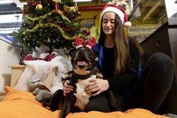 Quand les animaux fêtent Noël