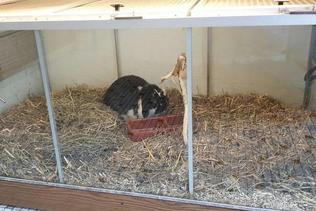 La PSA dénonce des abus dans les animaleries