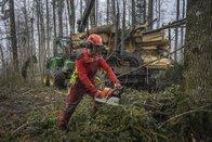 Environ 10'000 arbres victimes des tempêtes