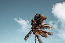 Pensez à l'histoire de l'île déserte