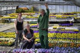 Des milliers de fleurs au compost