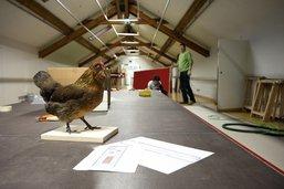 L'expo sur les poussins du Musée d'histoire naturelle est annulée