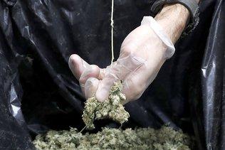 Vente accrue de produits dangereux avec du cannabis synthétique