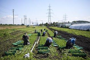 Pas de pénurie de main-d'oeuvre chez les agriculteurs