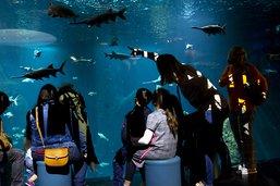Le public au rendez-vous de la réouverture d'Aquatis