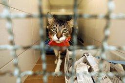 Séquestre de 36 chats confirmé