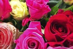 Des anecdotes florales à cueillir
