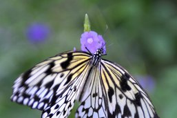 Le Papiliorama de Chiètres rouvre le 8 juin