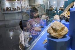 Le Musée d'histoire naturelle retrouve son public