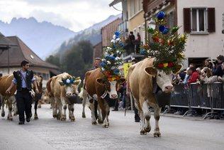 Annulation de désalpes dans le canton de Fribourg