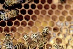 Le chant des abeilles