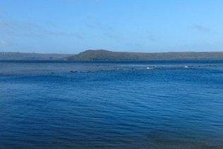 Environ 70 cétacés coincés dans une baie de Tasmanie