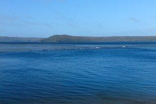 Cétacés échoués dans une baie de Tasmanie: des centaines sont morts
