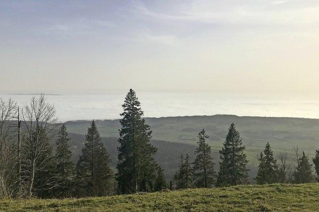 Une promenade des Anglais du haut