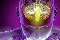 Alzheimer, le fruit de nos entrailles?