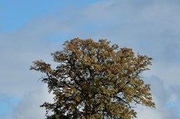 40 arbres seront plantés à Cugy