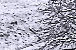 Le loup rôde en terre fribourgeoise