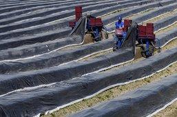 Une nouvelle stratégie pour le secteur agroalimentaire