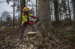 Du bois régional pour la future école de Dompierre