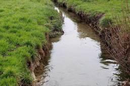 Ruisseau pollué au diesel à Morens
