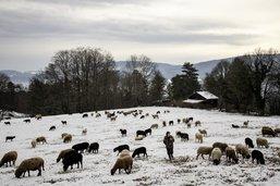 Des bergers au cœur de l'hiver