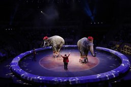 Dispute d'éléphants en plein cirque à Kazan