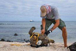 Valise contenant 185 tortues découverte à l'aéroport des Galapagos