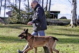 Détenteurs de chiens: vers un retour des cours obligatoires