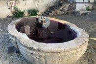 Des fontaines violettes